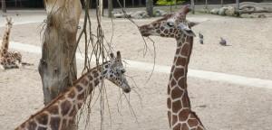 schoolreis naar safaripark beekse bergen