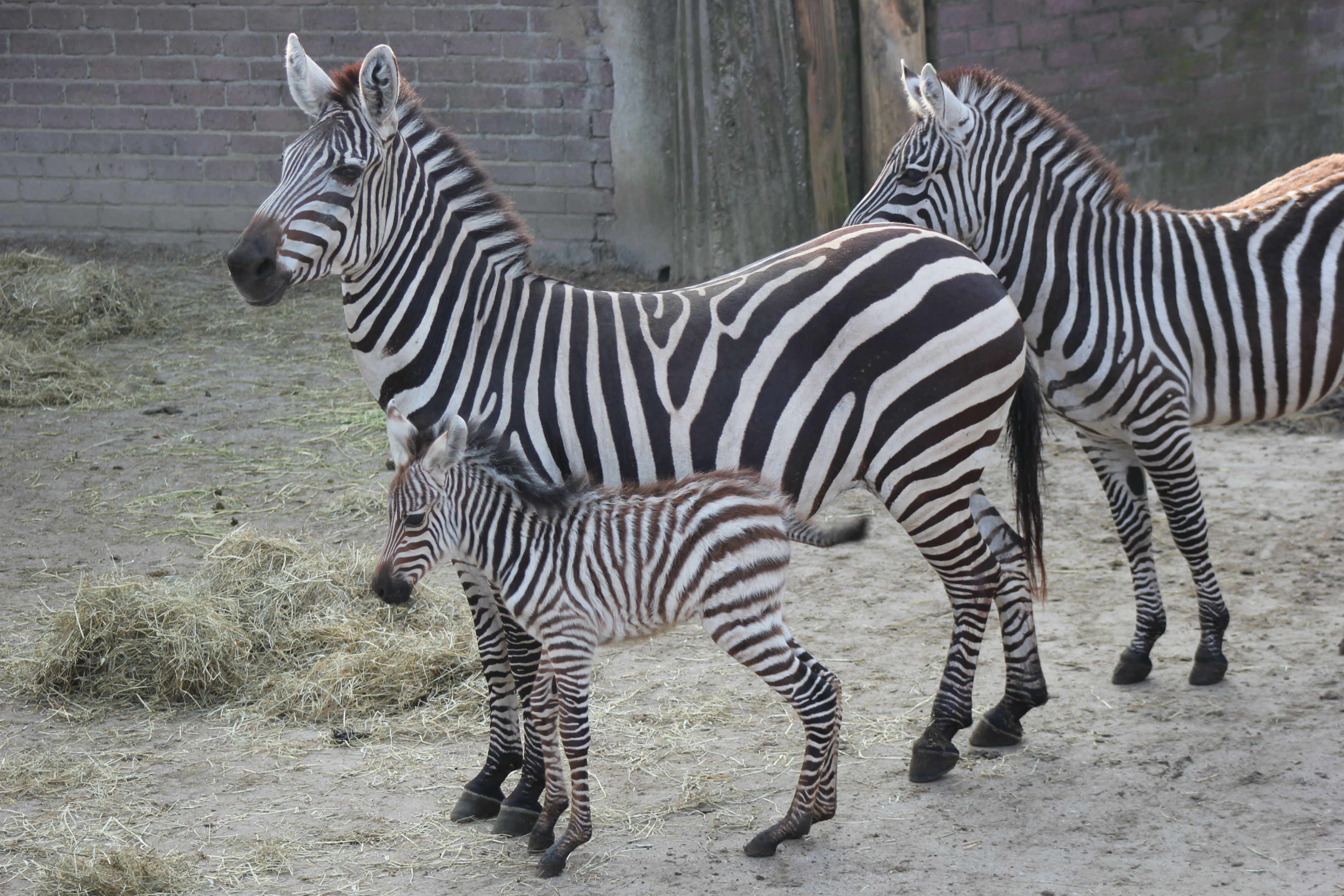 dierenpark emmen