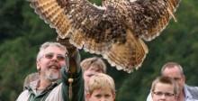 Roofvogelshows bij Kasteelruïne Valkenburg