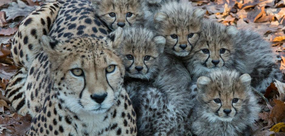 dierentuin burgerszoo